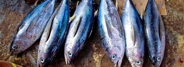 histamina en pescado azul
